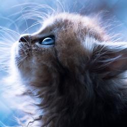 DandelionLightning Avatar