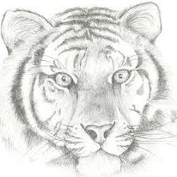 Tiger-lover Avatar