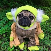 Pug Avatar