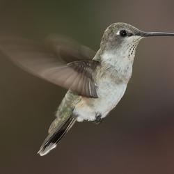 Hummingbird912 Avatar