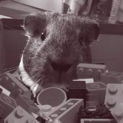 pusheenosaurus Avatar