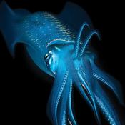 Squiddy-Tick Avatar