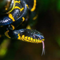 Tesla Builder Avatar