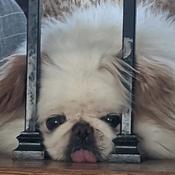 joansbones Avatar