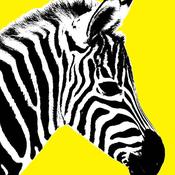 ZebraPineapple Avatar