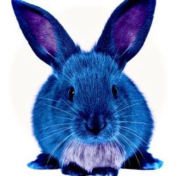 Blue_Bunny_DJ Avatar