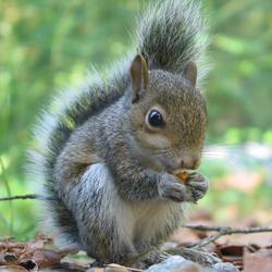 TheSquirrel Avatar