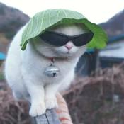 modmouse1324 Avatar