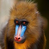 monkeyleader Avatar