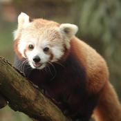 Pandapants200 Avatar