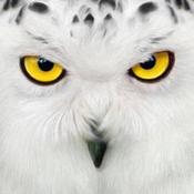 OwlLover4308 Avatar