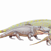 Ophiacodon Avatar