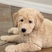 Puppy-Lover Avatar