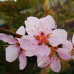 Sweet Spring Avatar