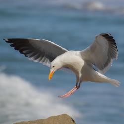 C Bird Avatar