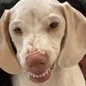 EthanCW114 Avatar