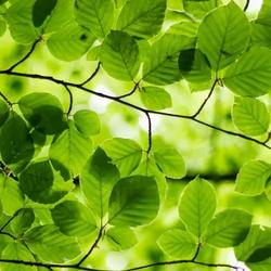 Crusty Banana Avatar