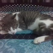 Magic Cat Tom Avatar