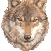 Wolf01 Avatar