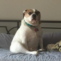 XivampiraiX Avatar