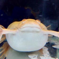 Weird Froggy Avatar