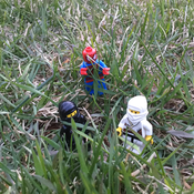 Courageous Kiwi Avatar