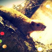 capybara Avatar
